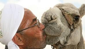 Camel_arab