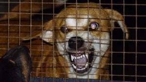 rabies-symptoms-dogs_c23c65de883c692a