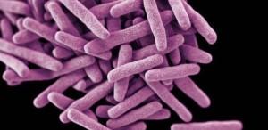 tb-bacteria-4